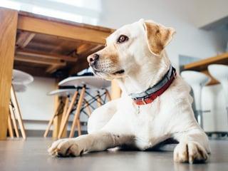 animal-dog-pet-indoors.jpg